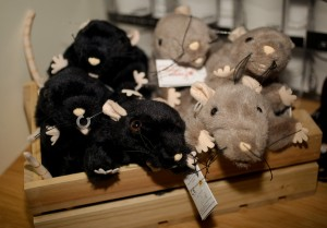 cuddly rats